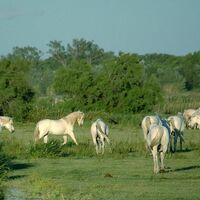 Escapade en Camargue - Excursion bus Beltrame